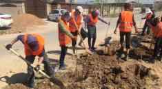 Шымкент: Жасыл желектерді күтіп ұстау жұмыстары жүргізілуде